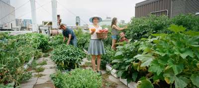 Students smiling and working in Sky Garden among the vegetables