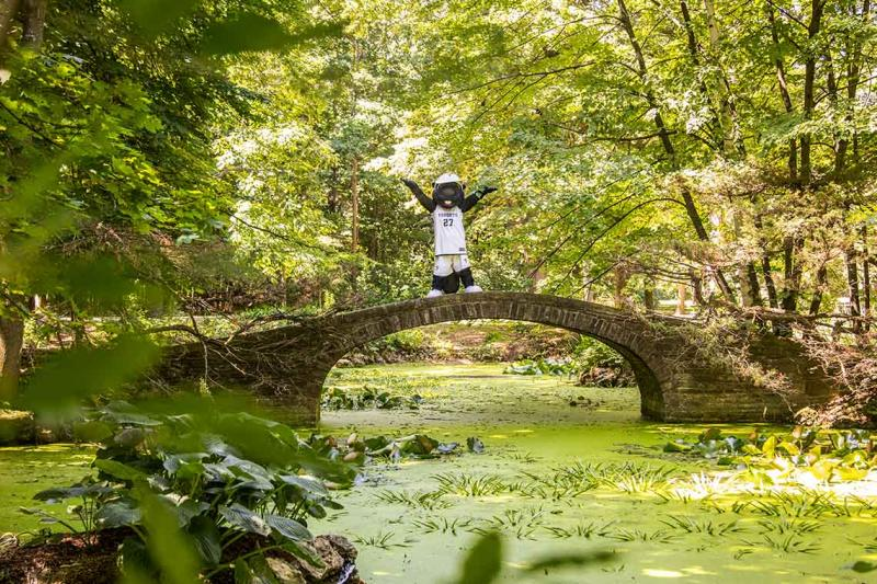 The True Blue mascot raises both arms while standing on a stone bridge arching over a lush pond in a sunlit woods.