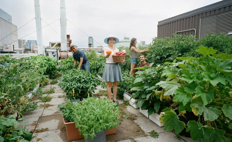 Students standing in Sky Garden at U of T smile as they garden