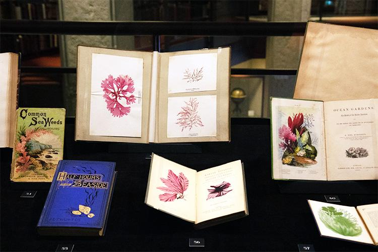 Treasures of the Deep by David Landsborough includes a bright pink specimen of seaweed preserved from the 19th century.