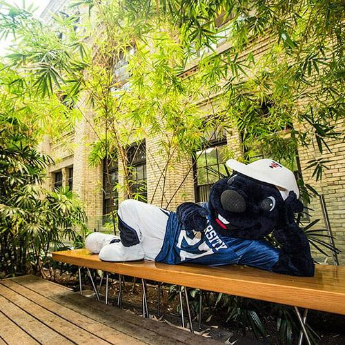 The True Blue mascot stretches along a wooden bench in an atrium next to a bamboo grove.
