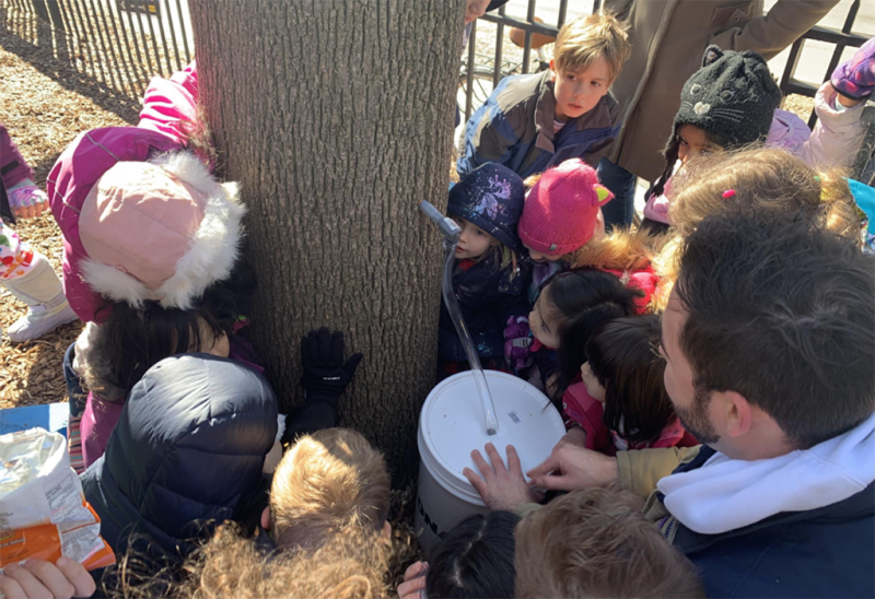 Small children lean their hands on a tree and intently watch sap dripping from a plastic spigot into a bucket.