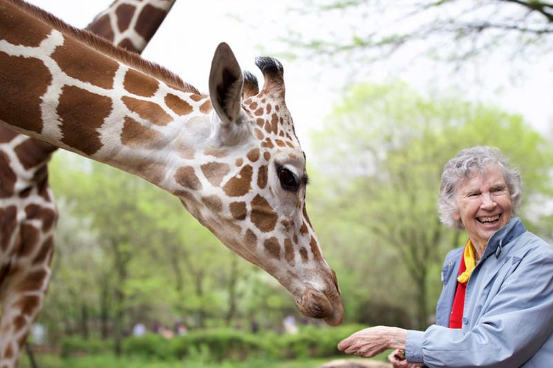 Anne Innis Dagg laughs as a giraffe bends down to eat from her hand.