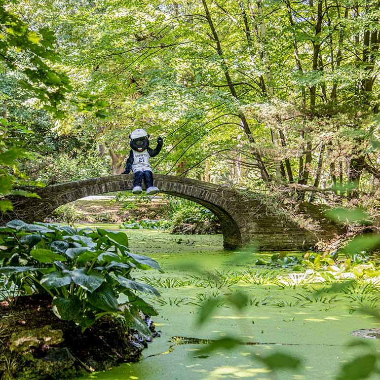 The True Blue mascot sits on the edge of a stone bridge without railings, arcing over a pond in the sunlit woods.
