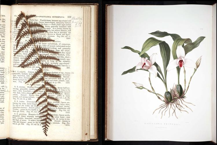 A fern specimen, added to A Systematic Arrangement of British Plants by an enthusiastic reader, and an illustration of an orchid in Orchidaceae of Mexico and Guatemala