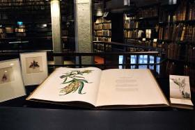 "Photo of the book ""Orchidaceae of Mexico and Guatemala"", which weighs a whopping 38 pounds and features life-sized illustrations of orchids (photo by Romi Levine)"