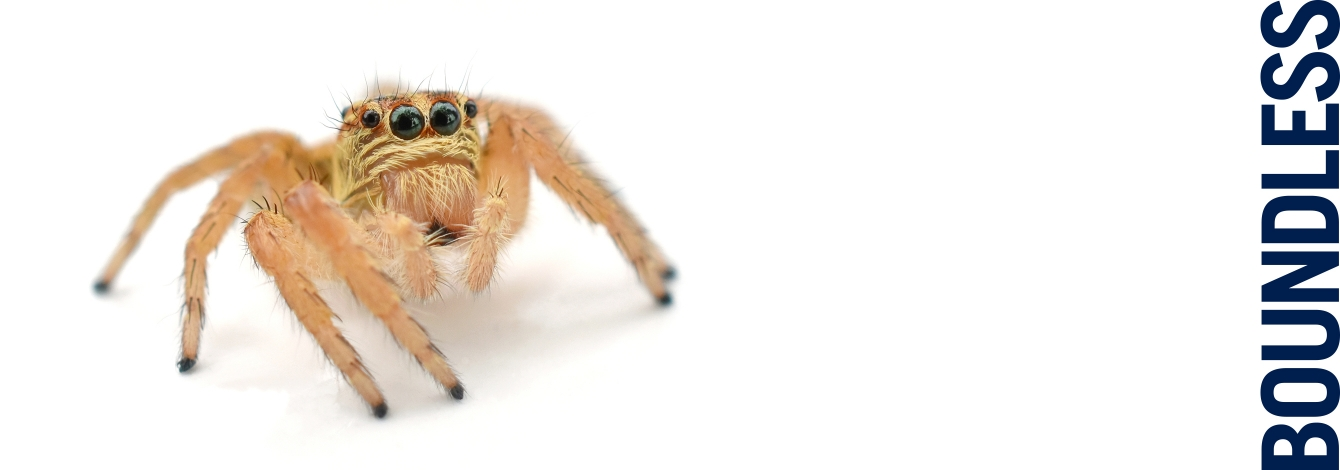 Image of cute spider